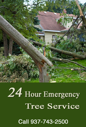 Tree Trimming | Emergency Service | Dayton and Cincinnati